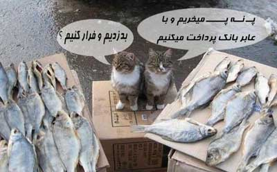 ماهی دزدی